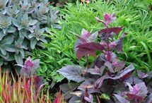 Nice plants combinations