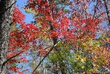 autumn / by Cindi Rollins
