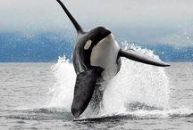 Delfines / Las más hermosas criaturas del océano