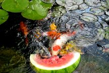 рыбки и прудики