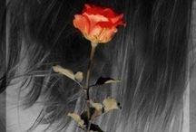 Woman & roses