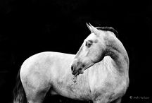 Horses photographie
