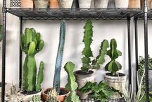 Cacti ideas for selling