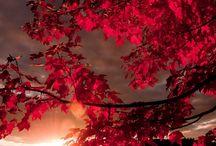 ☕  Lenyűgöző természet  ☕