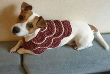 Christmas Pets / Pets love Christmas sweaters too!