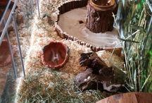 Hörcsög - hamster
