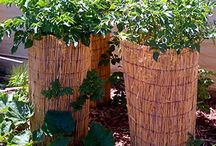 Grow Potatoes! / by Klondike Brands Potatoes