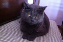 meu gatinho
