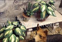 Plantes miniatures
