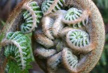God's Masterpieces....fractals