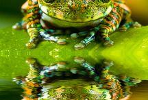 żabki i ...hop / żywe i wytworzone, ładne i brzydkie......... skaczące. cieszmy się że są na tym świecie