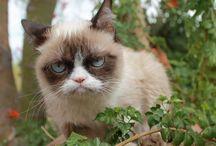 grumpy cat blank memes