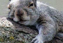 Squirrels / by Karissa Liloc