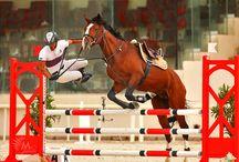 Horse / by Anna Pereira