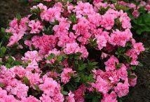 λουλουδια πολλαπλασιασμος