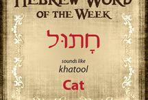 Hebrew Vocab