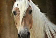 Horses / by Katrina Lum