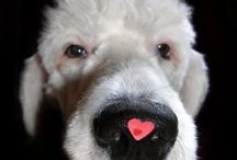 V.Day With Your Furry Loves