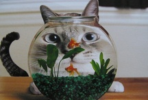 Kitty & Friends / kitty always hungry for fish but also plays with other critters