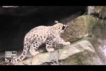 Filmiki o zwierzętach