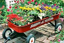Mi habilidad en el jardín / gardening