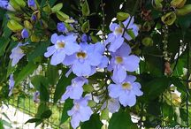 Flores e florais