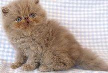 Jenny's bubba kitten/cat