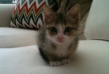 My lil' Mister