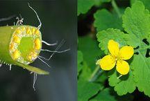 gyógynövények / herbs