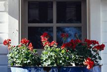 Window Boxes and Wall containers