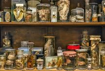 Curiosity cabinets