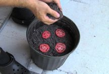 How to grow veggies from scraps / home grown veggies made easy