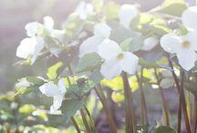 Gardening / by Milla Nilsson