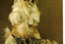 Pets Postcard