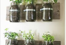 UOI outdoor environment/growing plants