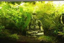 Asien Aquarium
