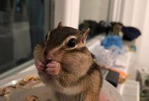Mikey / Chipmunk