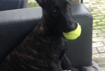 Chia / My belovend dog
