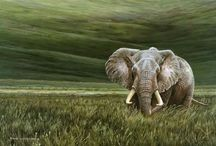 Ngorongoro Cater Tanzania