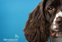 Miroslavich Photography: Pets