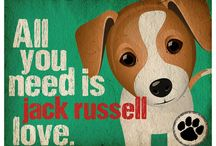 Jack the Russel