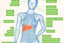 Metabolism probiotics