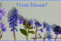 Blues / Blues on the 3rd April 2014 South Coast of England UK