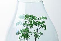 Bonsai terrarium