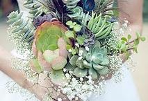 flora and fauna  / by Sasha Gomez