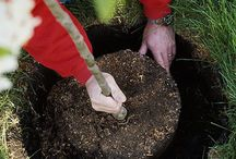 Caring for Your Trees / A board of pictures and tips for the care of our magnificent trees.
