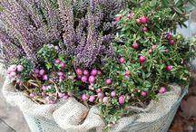 őszi növénykompozíciók