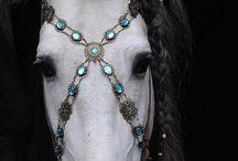 jewlery on horses
