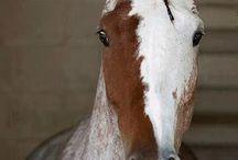 Horses / by Ciara Lawson