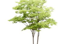 trees plants groundcovers